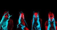Rise Against vypustili první vlaštovku z nové desky